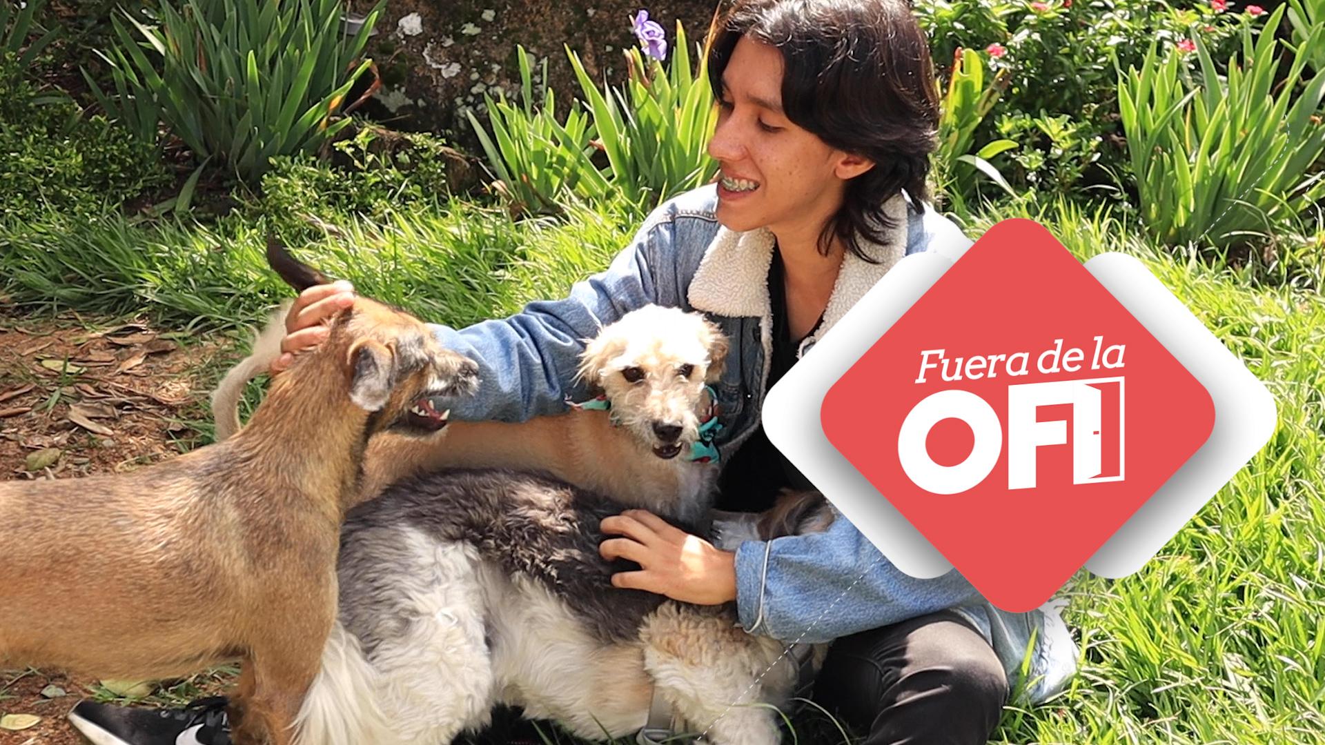 Fuera de la ofi Joan rescata perritos callejeros